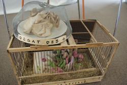 specimens recueillis