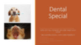 Dental Special June 2020.jpg