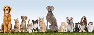 Veterinary consulting Pretoria