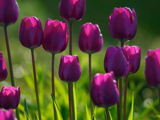 Picking Poems.Picking Flowers