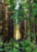 Bild på skogen i Knustorp