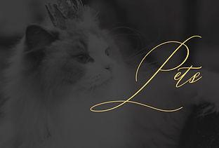 Pets 2019.jpg