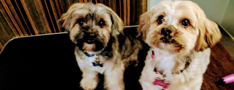Bruno & Lulu