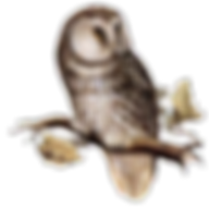 12774059611859866630owl-md.png