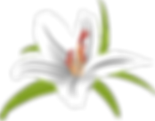 lilly-3203373_1280.png