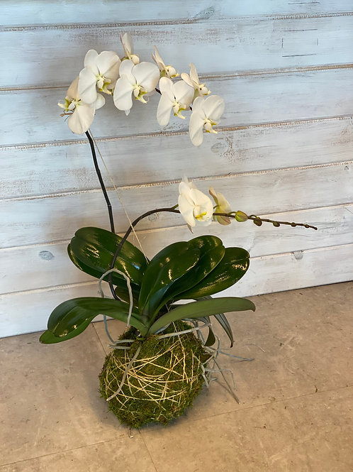 Orchid Moss Ball #1