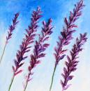 Lavender on Blue