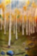 Aspen Trees Commission 12.jpg
