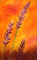 Lavender on Orange