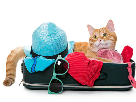 Top Three Reasons to Hire a Cat Sitter