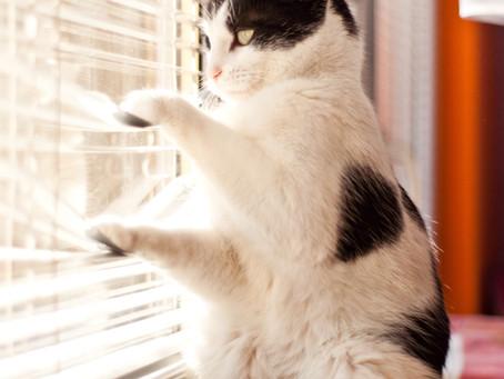 "Who Hires a Cat Sitter? Hint - Not Just ""Crazy Cat Ladies!"""
