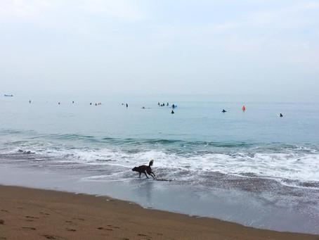 Ranní rituály - surfování a vlny