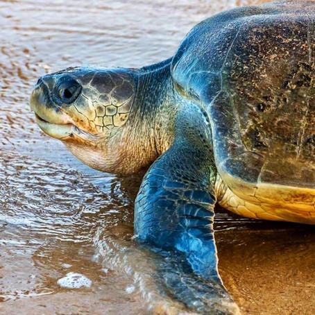 Ranní překvapení od želví dámy