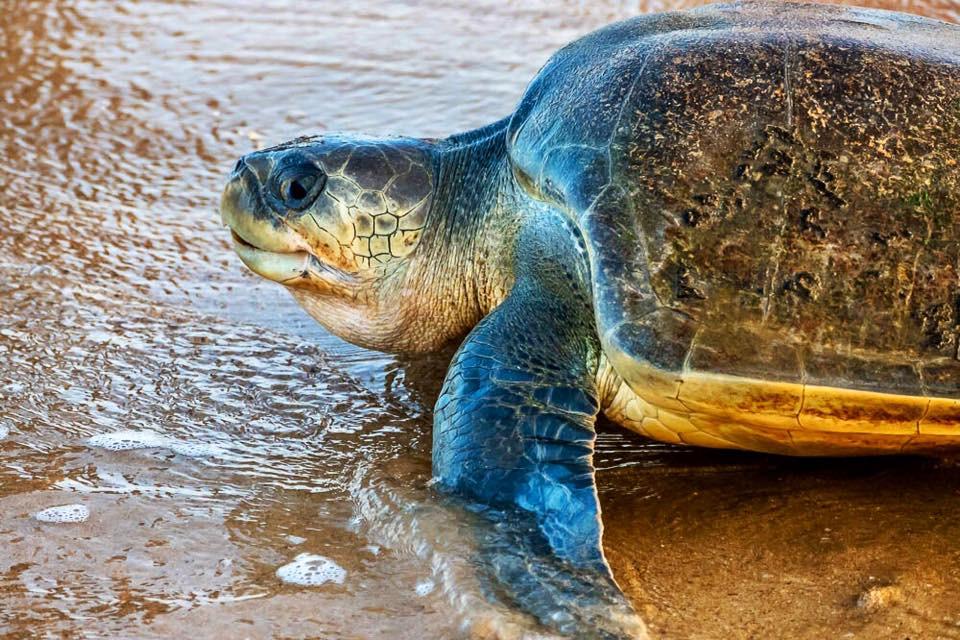 Takto vypadá spokojená želví máma