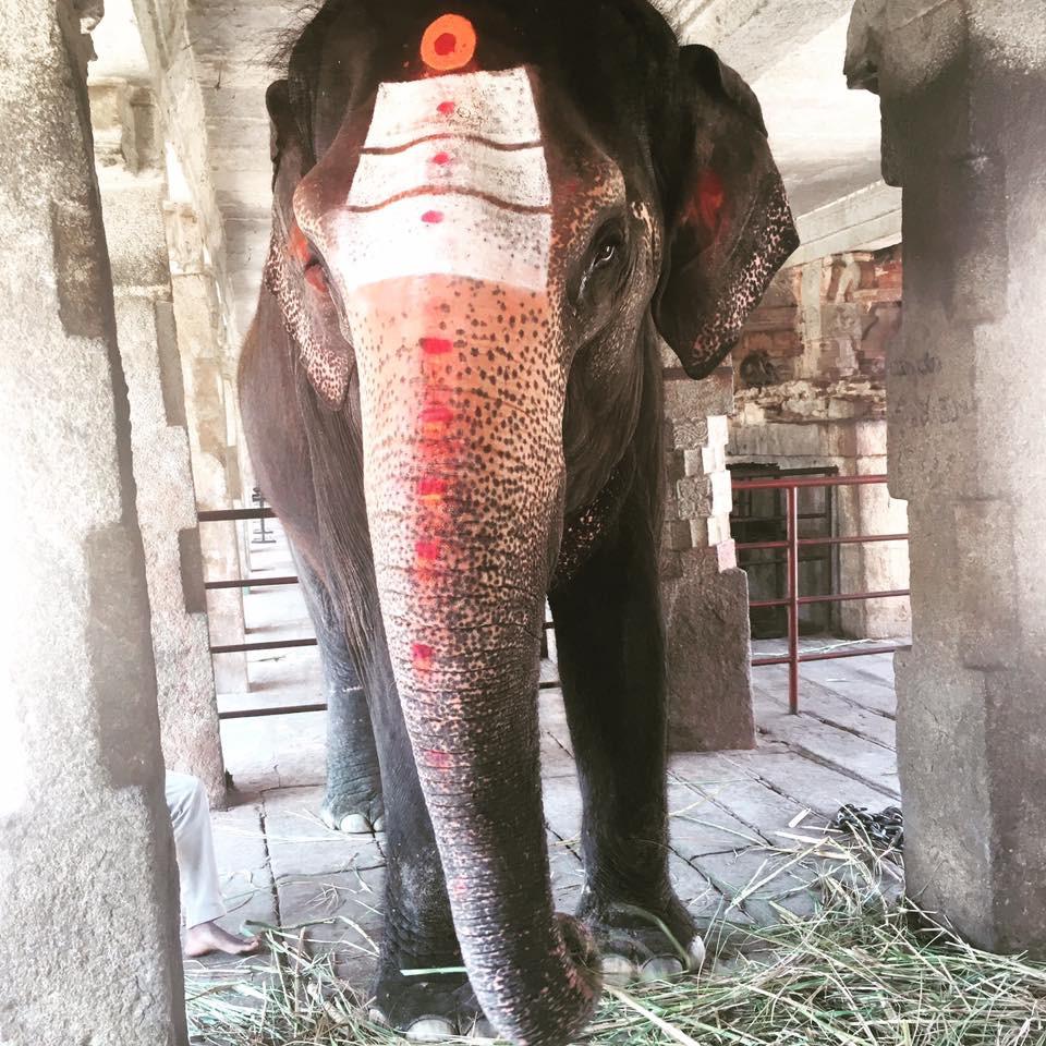 Sloni nosí štěstí a požehnání od nich jej ztrojnásobí