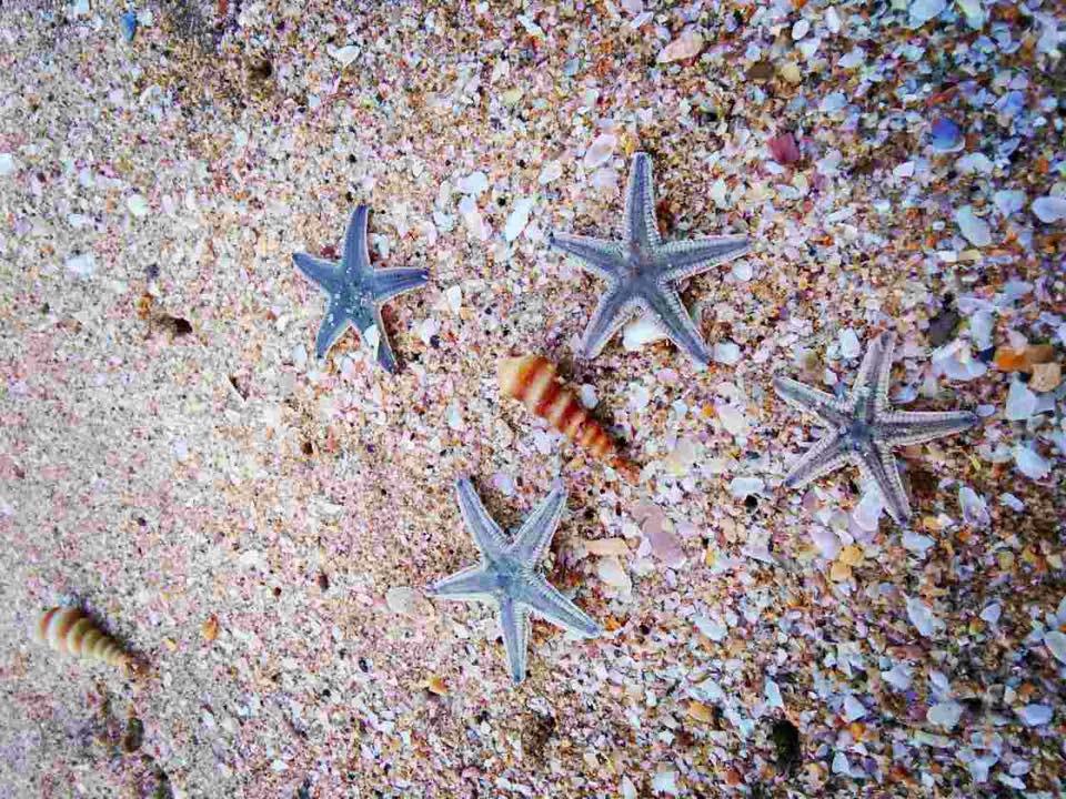 Mořské hvězdy na pobřeží Goa