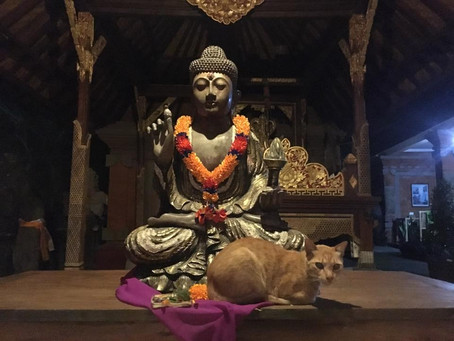 Bali kočičky a rybičky