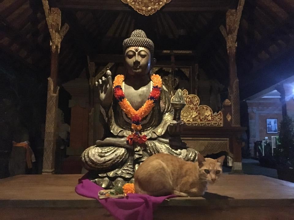 Drzá kočka a klidný Buddha