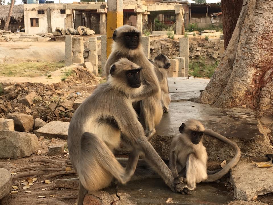 Ranní opičí rozjímání