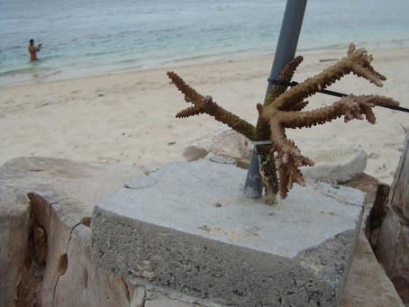 Plavba na ostrov Komodo