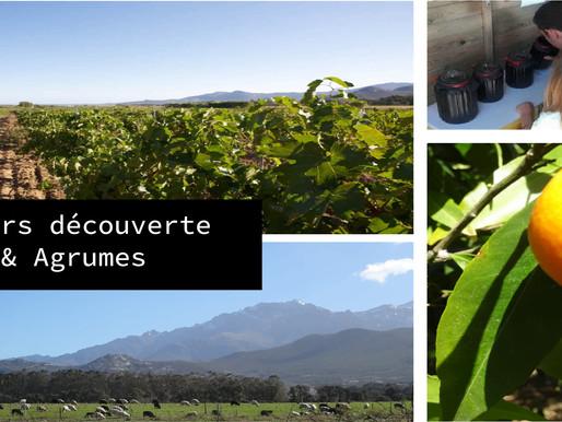 Parcours Vigne & Agrumes au Domaine a Ronca (Calenzana)