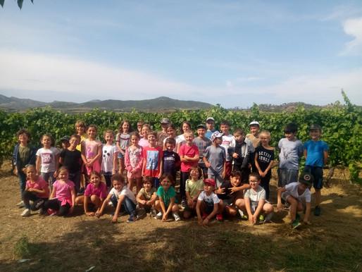 Création de sorties scolaires dans le vignoble