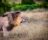 Safari2-1605295_1280.jpg