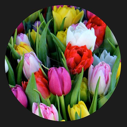 Multi-colour Tulips