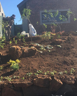 After the soil preparation and moving th