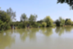 pear tree lake1.jpg