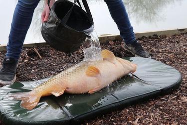 fishcare5.jpg