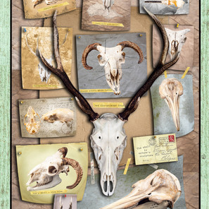 Twelve Skulls