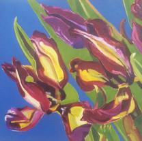 Tulips, Last Days
