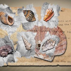 Eight Shells