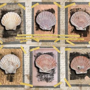 Six Scallop Shells