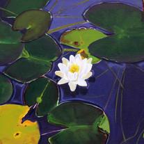 Lilies, Loch an Uachdair