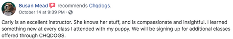Beagle Puppy Kindergarten Review
