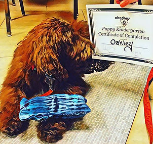 Congratulations to #Oakley on #puppykind