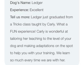 Dog Tricks Class