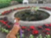 Chautauqua Wedding Dog by Fountain