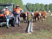 Farm Army helpers on ABC