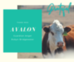 174-Avalon-canva.png