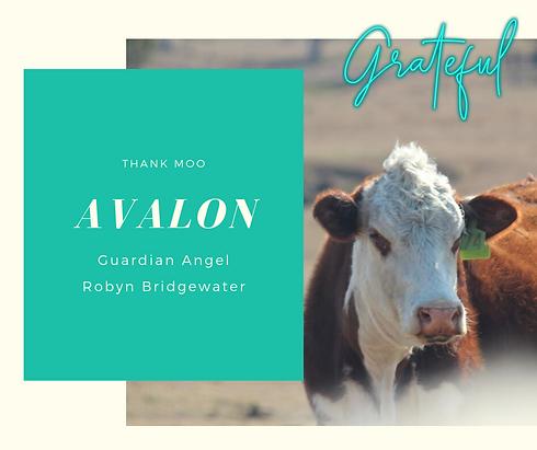 174-Avalon-canva.png