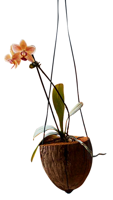 fleur_LDV.png