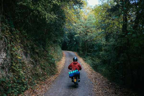 a motorcycle packed with stuff rides in between forests