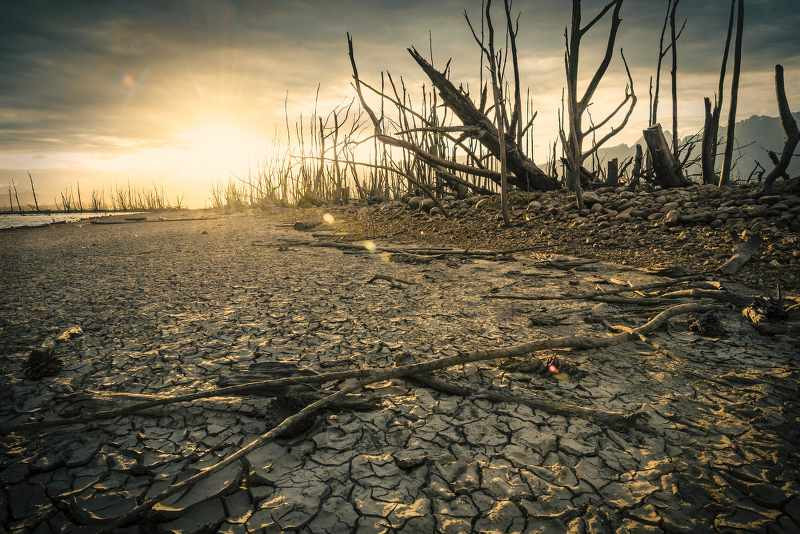 apocalypse landscape wth burnt trees and dry land_800x534.jpg