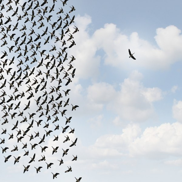 birds flying in order while there is one outside of the group.jpg