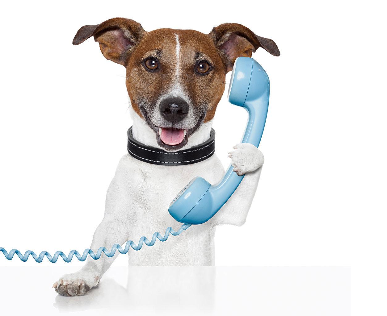 TELEPHONE SKILLS VIRTUAL GROUP TRAINING