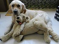 Doggy Walker BXL