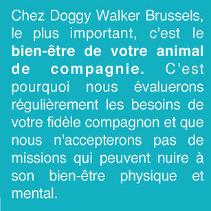 Les service de dog walking et pet sitting